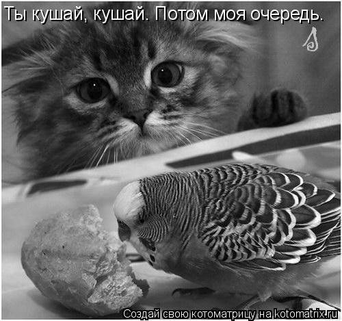 Котоматрица: Ты кушай, кушай. Потом моя очередь.