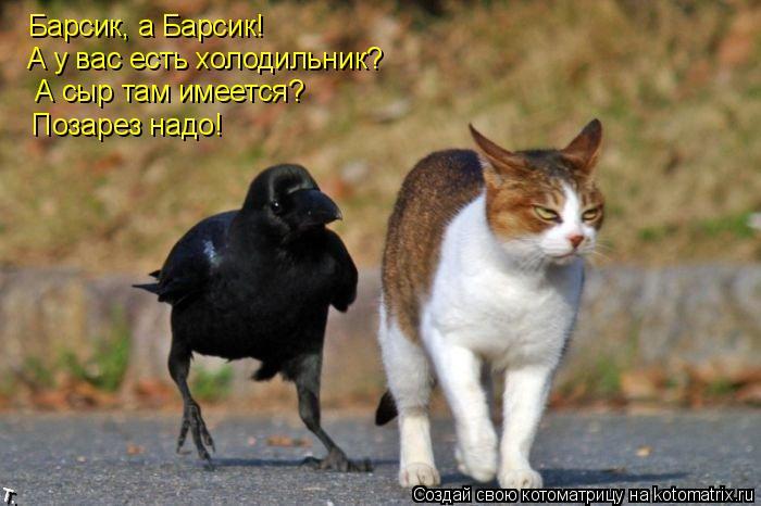 Котоматрица: Барсик, а Барсик!  А у вас есть холодильник?  А сыр там имеется?  Позарез надо!