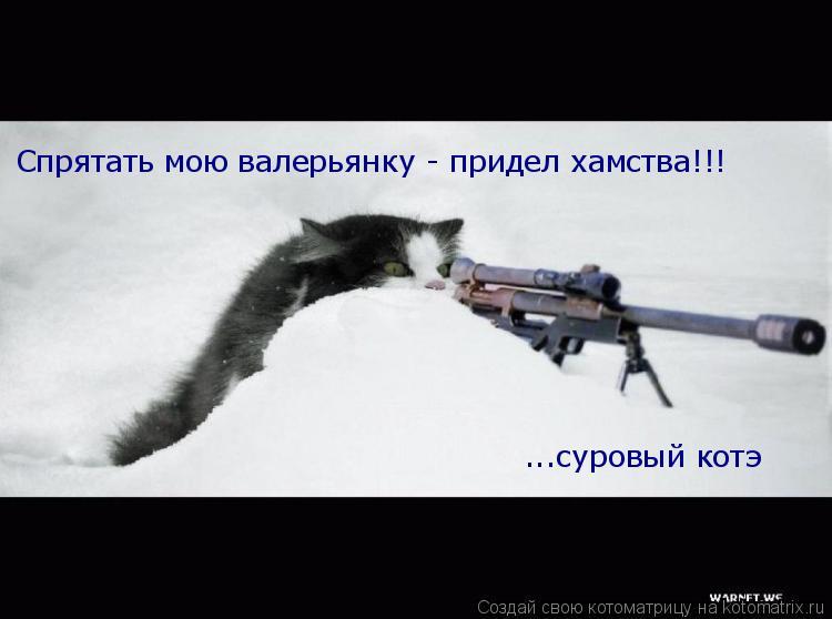 Котоматрица: Спрятать мою валерьянку - придел хамства!!! ...суровый котэ