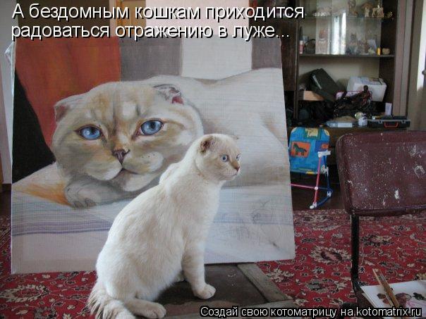Котоматрица: А бездомным кошкам приходится  радоваться отражению в луже...
