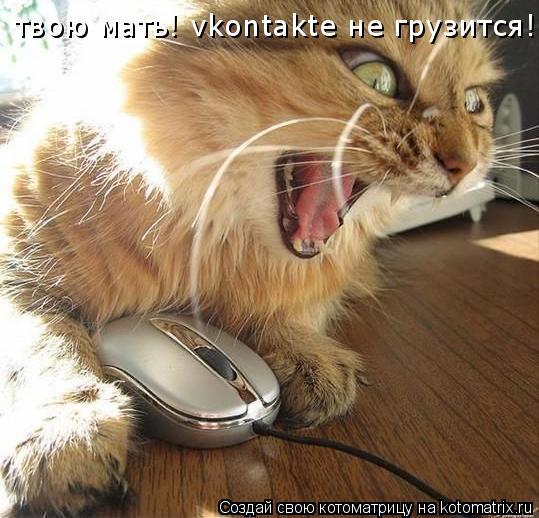 Котоматрица: твою мать! vkontakte не грузится!!!