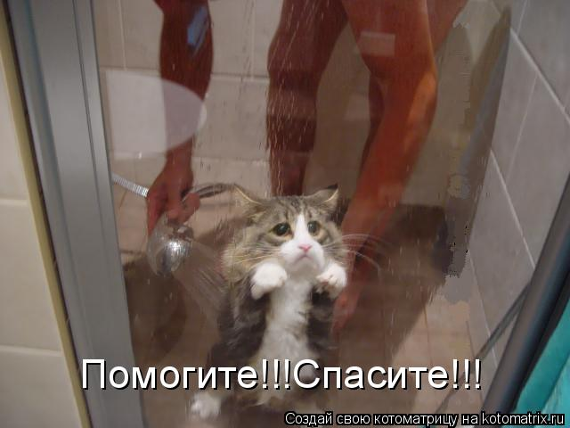 Котоматрица: Помогите!!!Спасите!!!
