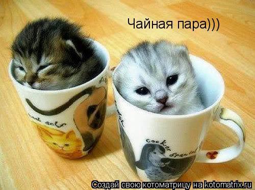 Котоматрица: Чайная пара)))