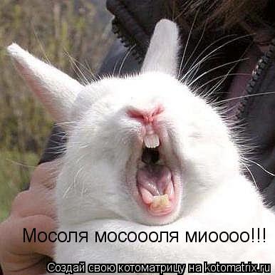 Котоматрица: Мосоля мосоооля миоооо!!!
