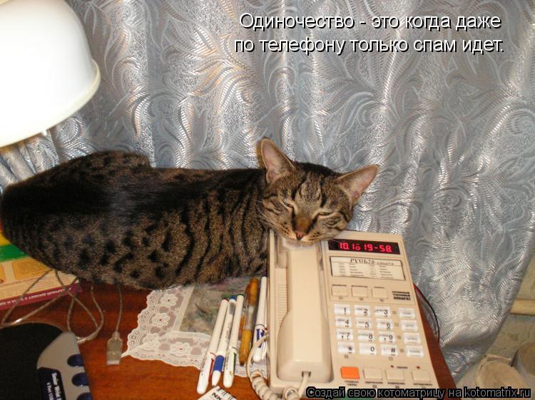 Котоматрица: Одиночество - это когда даже по телефону только спам идет.