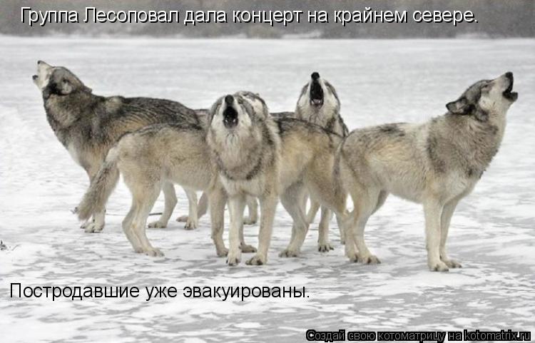 Котоматрица: Группа Лесоповал дала концерт на крайнем севере. Постродавшие уже эвакуированы.