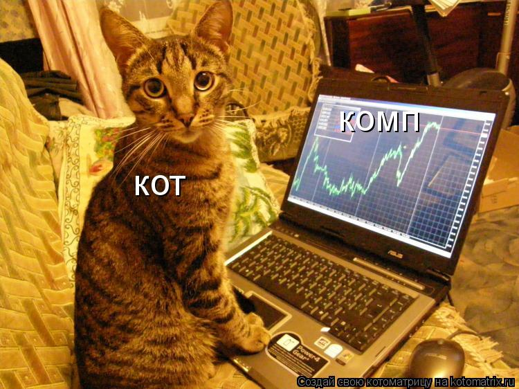 Котоматрица: кот комп