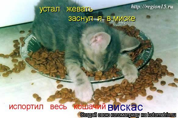 Котоматрица: устал   жевать заснул  я  в миске испортил   весь   кошачий    вискас