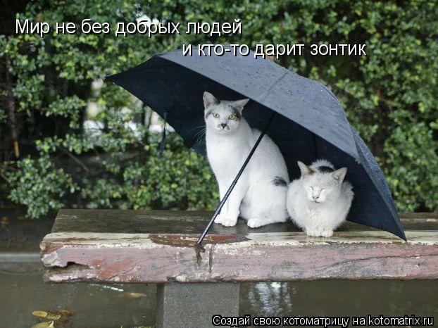 Котоматрица: Мир не без добрых людей и кто-то дарит зонтик