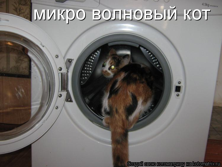 Котоматрица: микро волновый кот