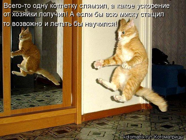 Котоматрица: Всего-то одну котлетку слямзил, а какое ускорение от хозяйки получил! А если бы всю миску стащил  то возвожно и летать бы научился!