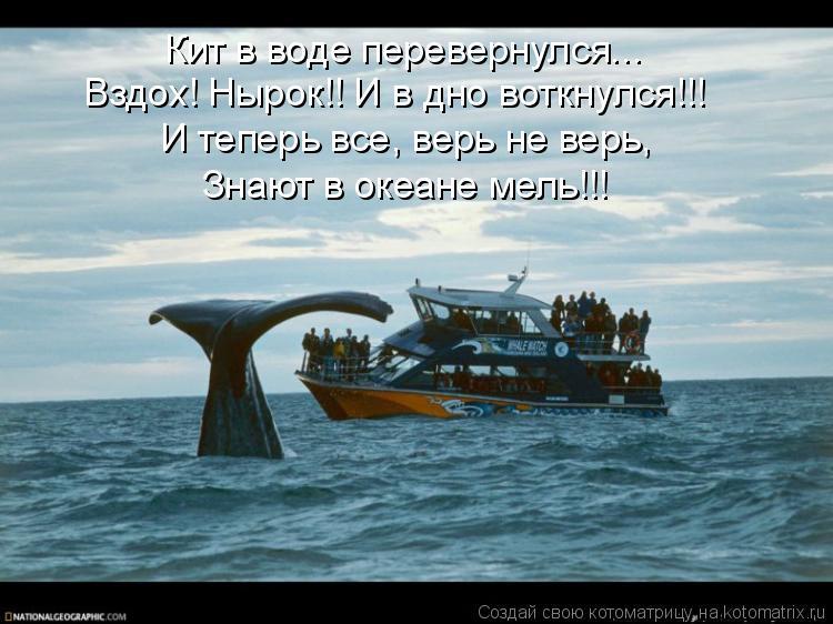 Котоматрица: Кит в воде перевернулся... Вздох! Нырок!! И в дно воткнулся!!! И теперь все, верь не верь,  Знают в океане мель!!!