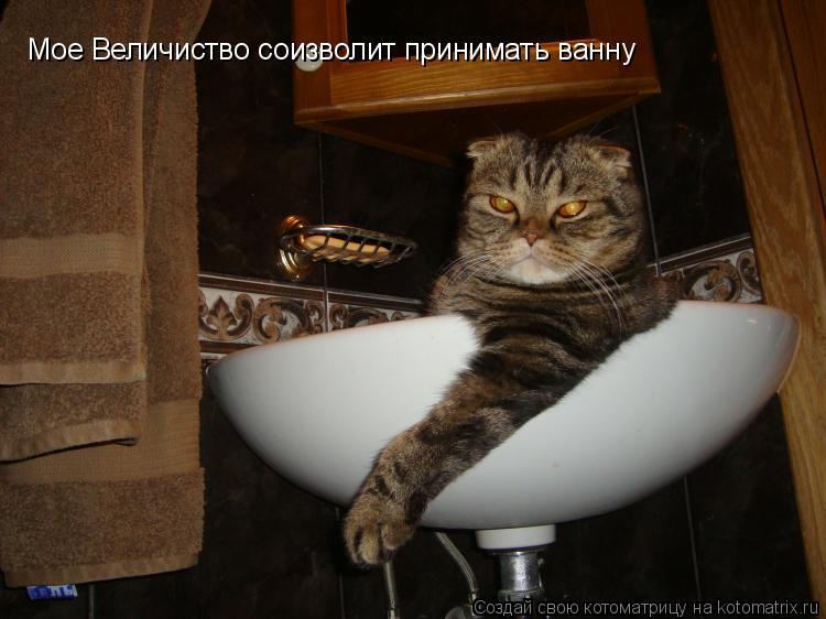 Котоматрица: Мое Величиство соизволит принимать ванну