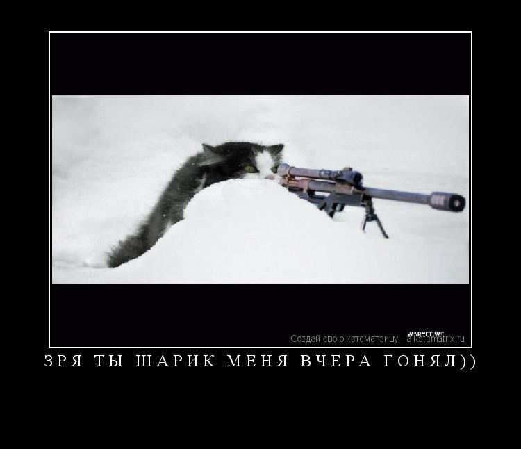 Котоматрица: ЗРЯ ТЫ ШАРИК МЕНЯ ВЧЕРА ГОНЯЛ))