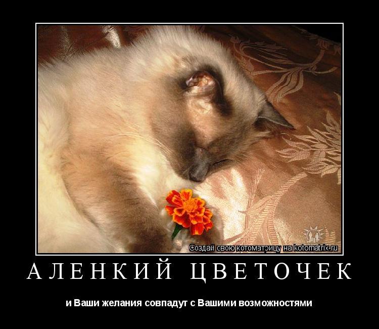 Котоматрица: Аленкий цветочек и Ваши желания совпадут с Вашими возможностями