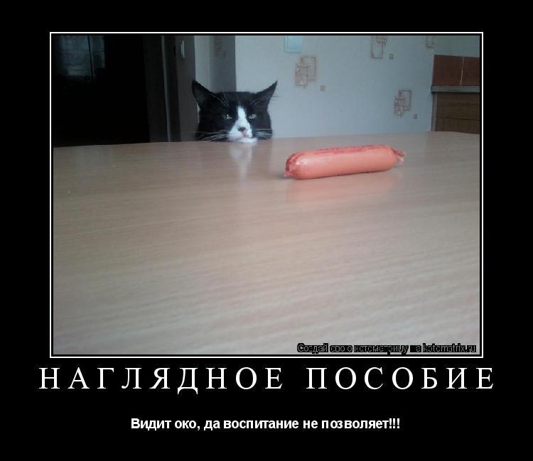 Котоматрица: НАГЛЯДНОЕ ПОСОБИЕ Видит око, да воспитание не позволяет!!!