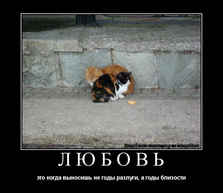 Котоматрица: любовь это когда выносишь не годы разлуги, а годы близости