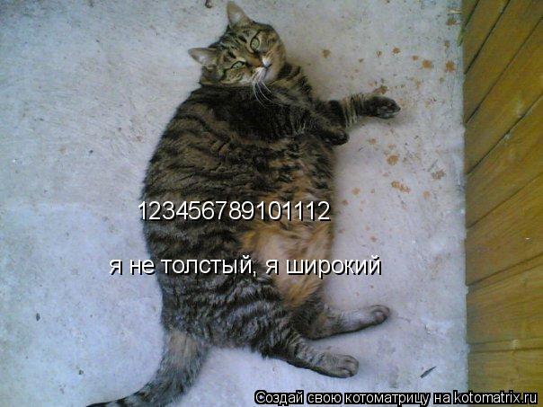 Котоматрица: 123456789101112  я не толстый, я широкий