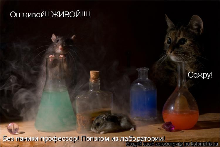 Котоматрица: Он живой!! ЖИВОЙ!!!! Без паники профессор! Ползком из лаборатории! Сожру!