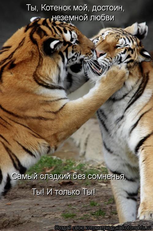 Котоматрица: Ты, Котенок мой, достоин,  неземной любви Самый сладкий без сомненья,  Ты! И только Ты!