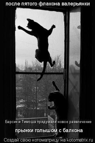 Котоматрица: после пятого флакона валерьянки Барсик и Тимоша придумали новое развлечение прыжки голышом с балкона