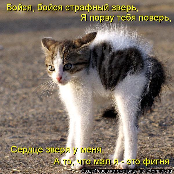 Котоматрица: Бойся, бойся страфный зверь, Я порву тебя поверь, Сердце зверя у меня, А то, что мал я - это фигня