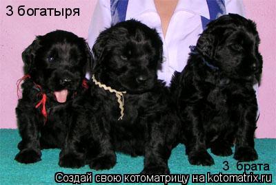Котоматрица: 3 богатыря 3  брата