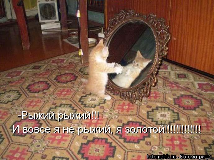 Котоматрица: -Рыжий,рыжий!!!  И вовсе я не рыжий, я золотой!!!!!!!!!!!!!