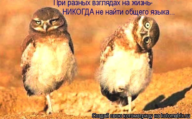 Котоматрица: При разных взглядах на жизнь- НИКОГДА не найти общего языка...