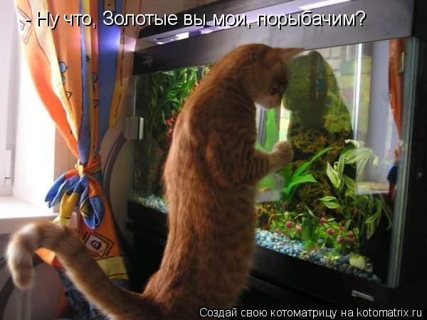 Котоматрица: - Ну что, Золотые вы мои, порыбачим?