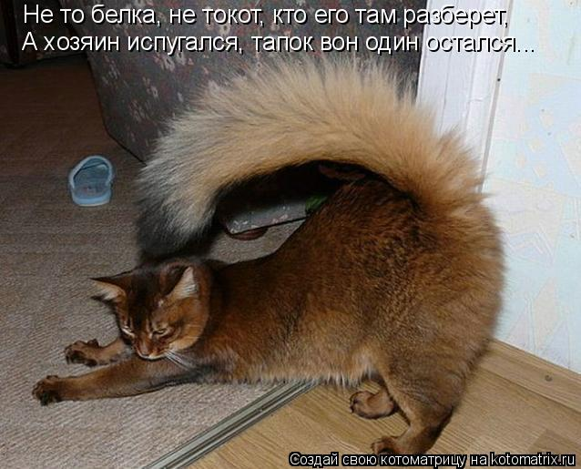 Котоматрица: Не то белка, не токот, кто его там разберет, А хозяин испугался, тапок вон один остался...