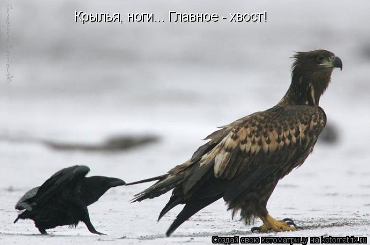 Котоматрица: Крылья, ноги... Главное - хвост!
