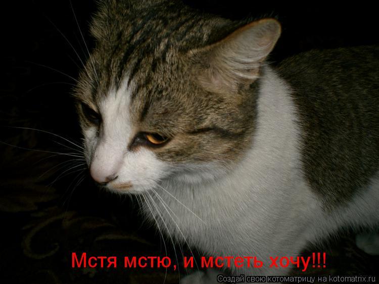 Котоматрица: Мстя мстю, и мстеть хочу!!!