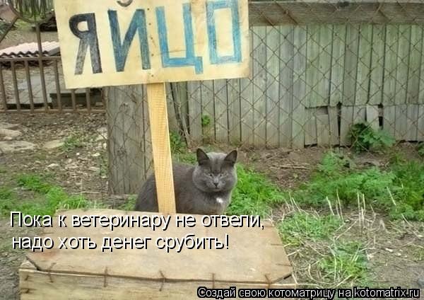 Котоматрица: Пока к ветеринару не отвели, надо хоть денег срубить!