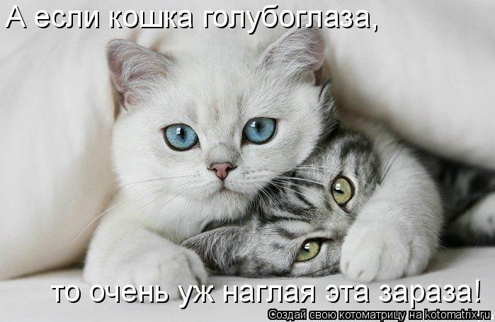 Котоматрица: А если кошка голубоглаза, то очень уж наглая эта зараза!