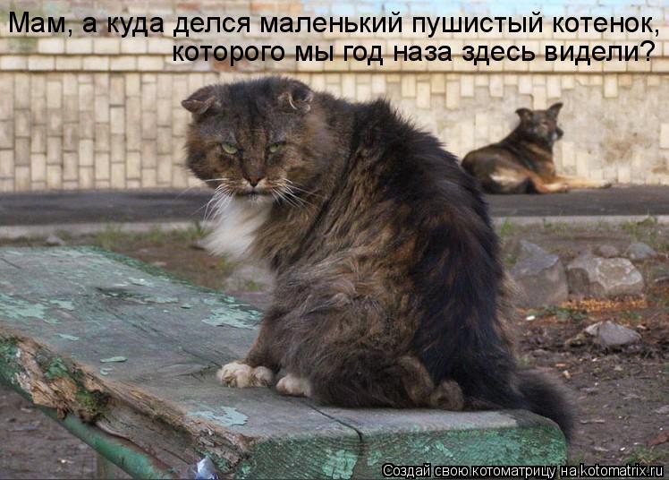 Котоматрица: Мам, а куда делся маленький пушистый котенок, которого мы год наза здесь видели?