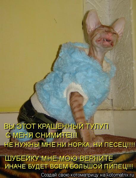 Котоматрица: ШУБЕЙКУ МНЕ МОЮ ВЕРНИТЕ, ВЫ ЭТОТ КРАШЕННЫЙ ТУЛУП  С МЕНЯ СНИМИТЕ!!! НЕ НУЖНЫ МНЕ НИ НОРКА, НИ ПЕСЕЦ!!!!  ИНАЧЕ БУДЕТ ВСЕМ БОЛЬШОЙ ПИПЕЦ!!!