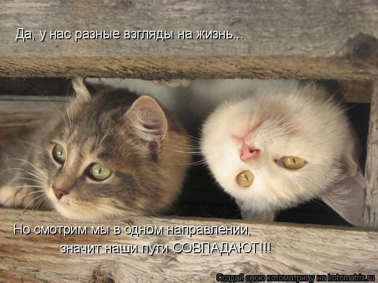 Котоматрица: Да, у нас разные взгляды на жизнь... Но смотрим мы в одном направлении, значит наши пути СОВПАДАЮТ!!!