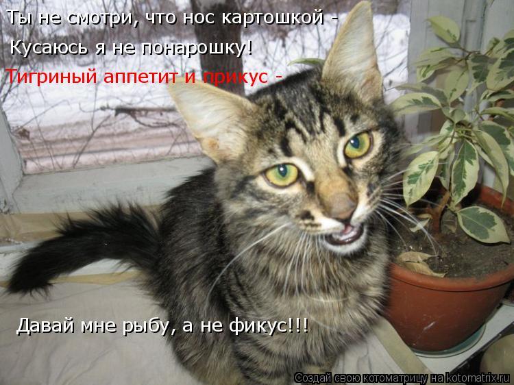 Котоматрица: Кусаюсь я не понарошку! Тигриный аппетит и прикус -  Давай мне рыбу, а не фикус!!! Ты не смотри, что нос картошкой -