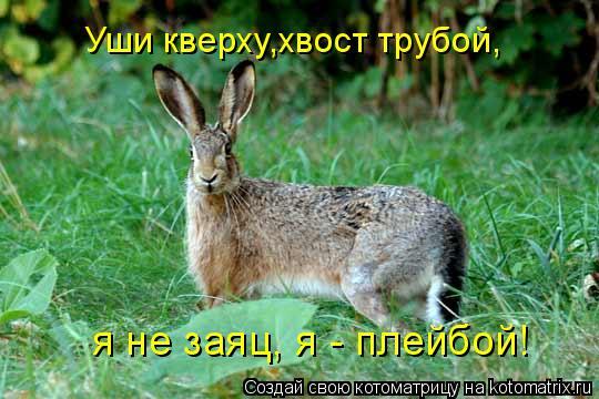 Котоматрица: Уши кверху,хвост трубой, я не заяц, я - плейбой!