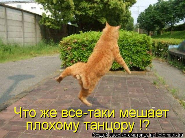 Котоматрица: Что же все-таки мешает плохому танцору !?