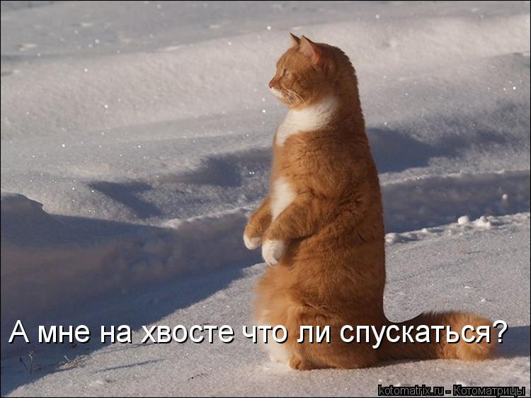 Котоматрица: А мне на хвосте что ли спускаться?