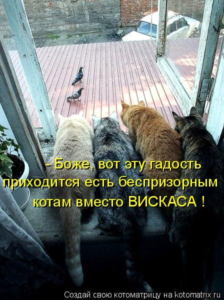 Котоматрица: - Боже, вот эту гадость приходится есть беспризорным котам вместо ВИСКАСА !