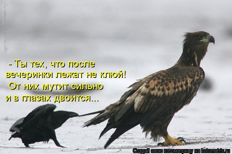 Котоматрица: - Ты тех, что после  вечеринки лежат не клюй! От них мутит сильно и в глазах двоится...