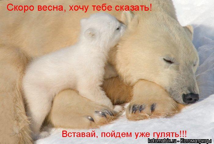 Котоматрица: Вставай, пойдем уже гулять!!! Скоро весна, хочу тебе сказать!
