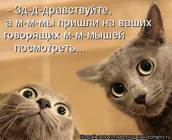 Котоматрица: - Зд-д-дравствуйте, а м-м-мы пришли на ваших говорящих м-м-мышей  посмотреть...