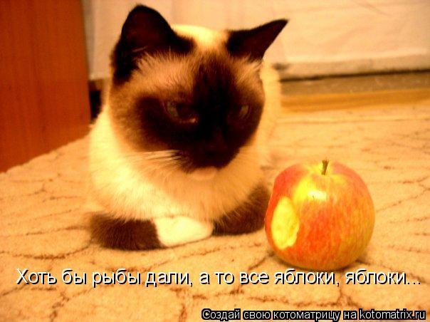 Котоматрица: Хоть бы рыбы дали, а то все яблоки, яблоки...