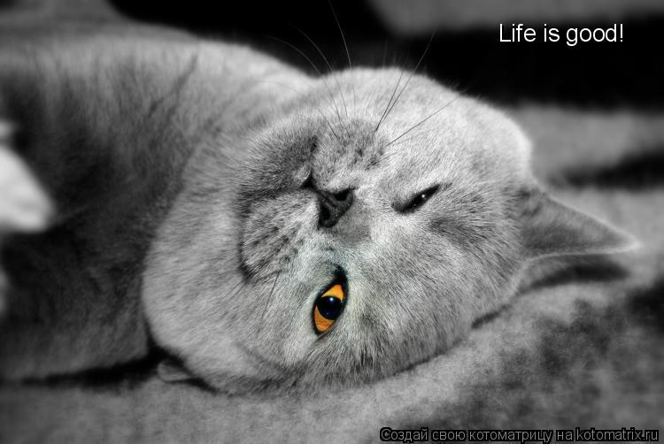 Котоматрица: Life is good!