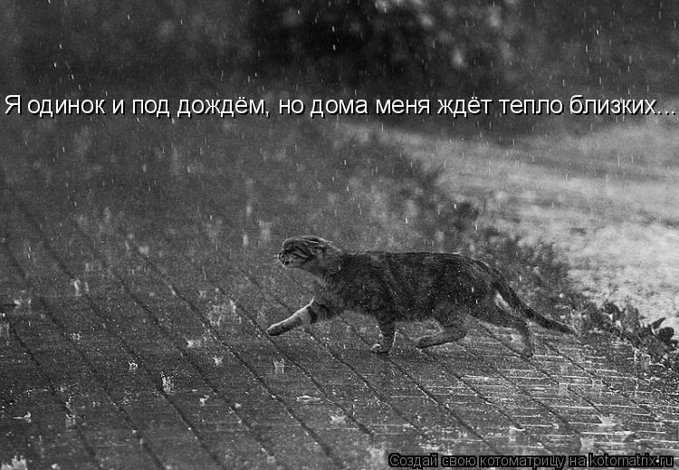 Котоматрица: Я одинок и под дождём, но дома меня ждёт тепло близких...