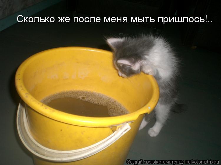 Котоматрица: Сколько же после меня мыть пришлось!..